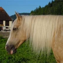 Blonde-Kopf-Seite1